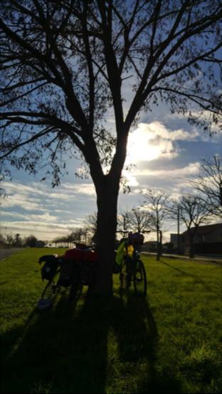 Bici junto a un árbol