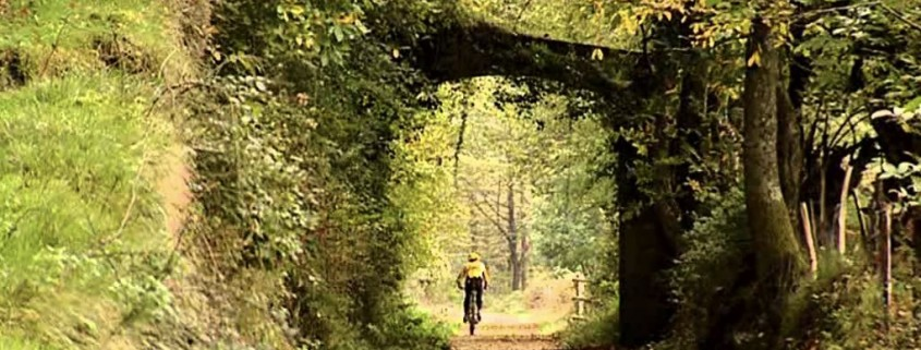 Ciclista por via verde. Vegetación frondosa.